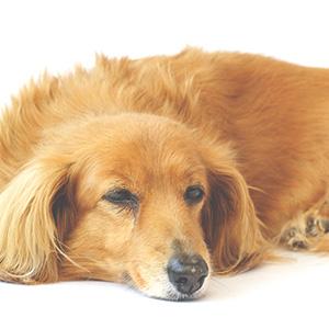 シニアサポートと在宅獣医療の選択について